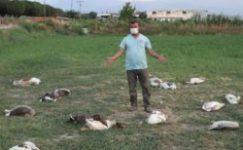 Denizli'de CHP'li başkan kazları vurdu iddiası