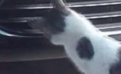 Sivas'ta kedinin fareyle imtihanı kamerada